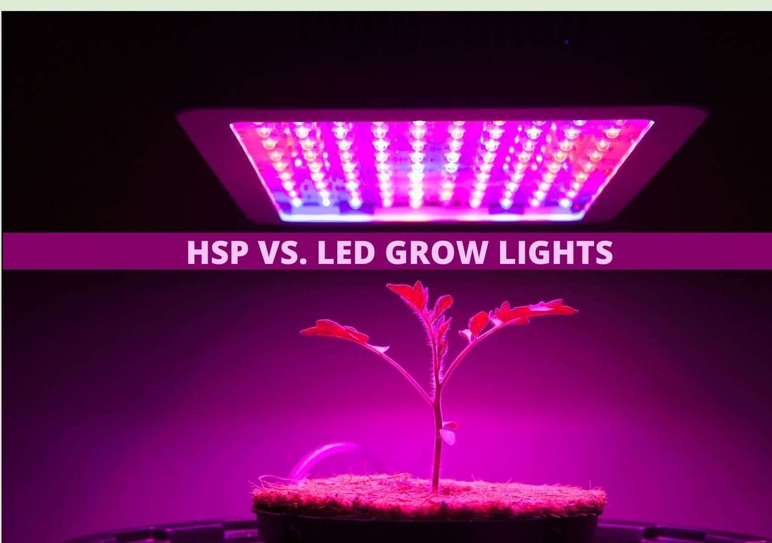 HSP vs. LED Grow Lights
