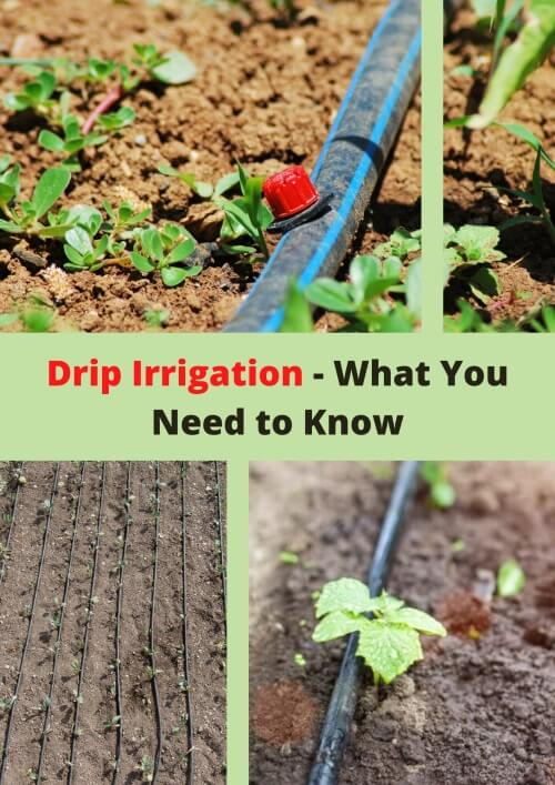 What is Drip Irrigation
