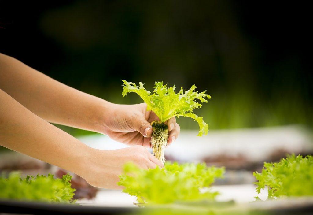 Wick System Hydroponics Gardening