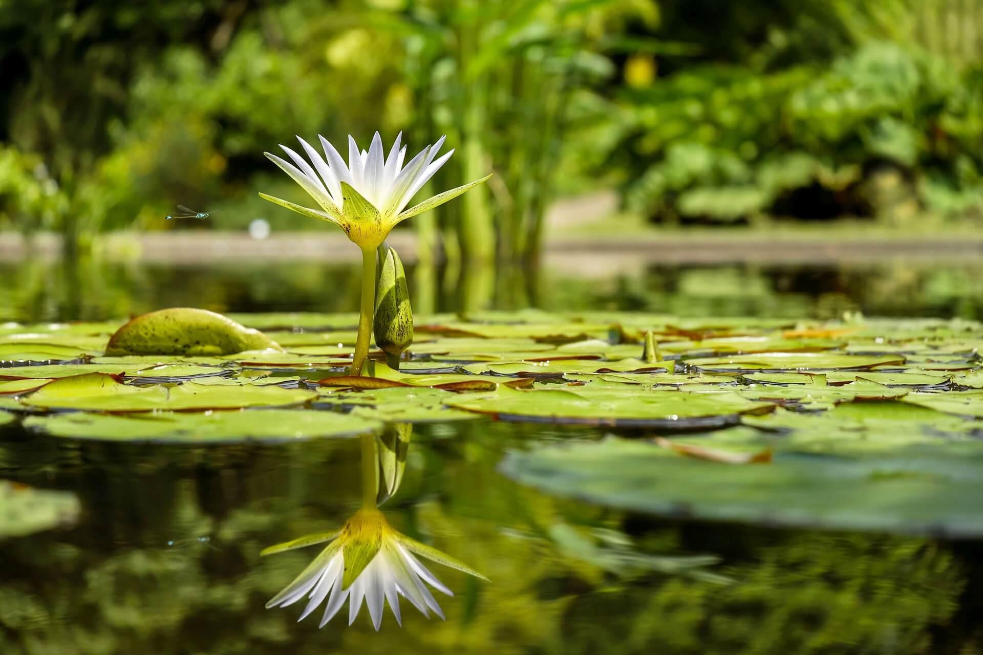 an aquatic plant