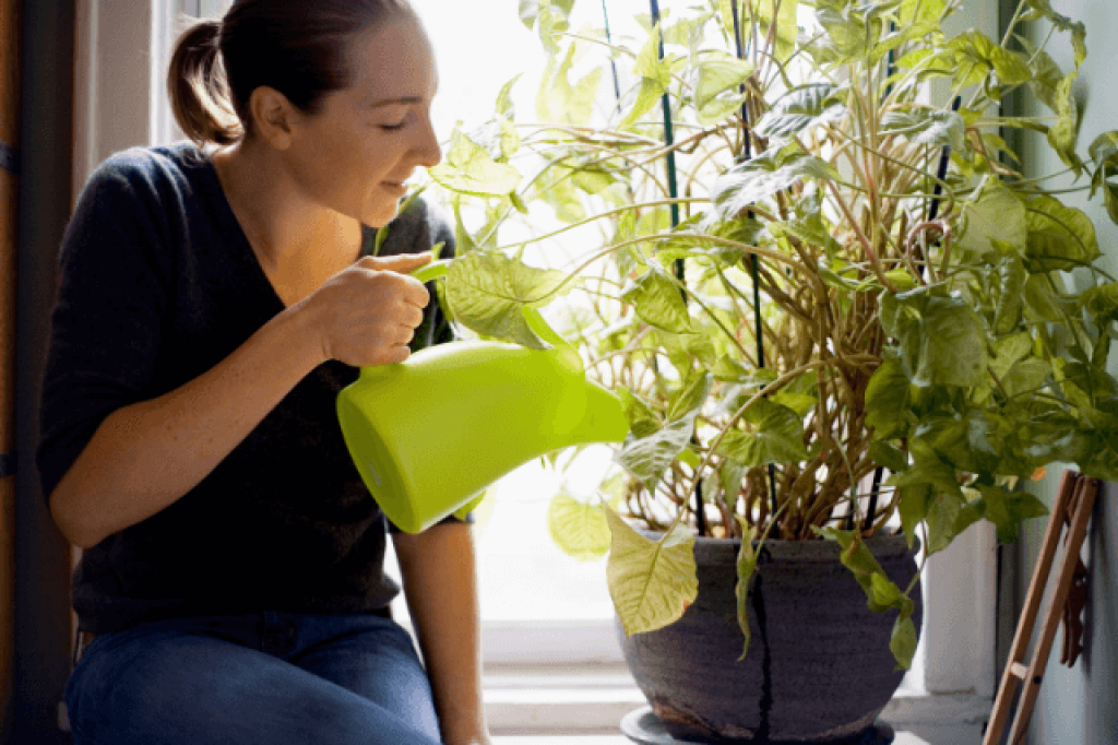 woman watering plants with a can